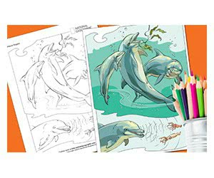 Free National Geographic Coloring Book: Animals