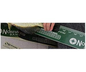 Free Northview Bank Fish Ruler