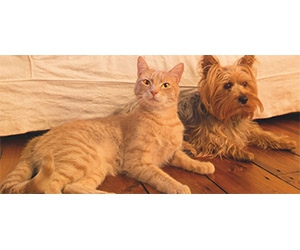 Free PetSafe Litter Boxes, Trainers, Toy, Feeders And More